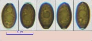 agaric10.pixi